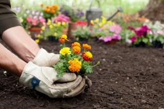 I 12 migliori guanti da giardinaggio: classifica, guida all'acquisto e offerte