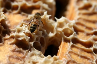 I benefici del veleno d'api per cosmesi e terapia