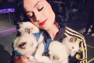 I cuccioli delle star: ecco i più famosi sui social (FOTO)