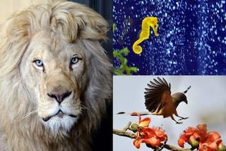Oroscopo: un animale guida per ogni segno zodiacale (FOTO)