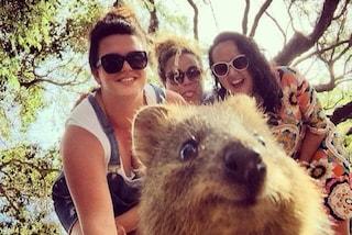 """""""Quokka selfie"""": l'animale più felice al mondo conquista il web (FOTO)"""