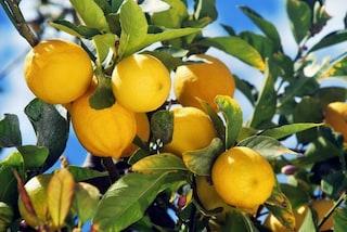 Stanchi dei soliti deodoranti? Utilizzate il limone