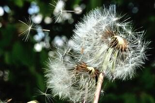 Combatti le allergie di primavera anche a tavola: ecco gli alimenti perfetti