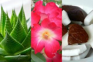 I 5 prodotti bio che non possono mancare nel tuo beauty case (FOTO)