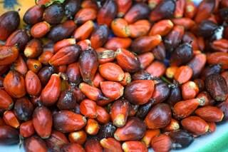 Olio di palma: perché fa male alla salute?