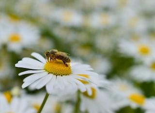 Dimmi che fiore ti piace e ti dirò chi sei (FOTO)