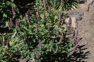 Come curare l'ansia con le erbe naturali