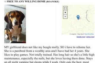 La fidanzata gli chiede di scegliere tra lei e il cane: lui sceglie di rimanere col beagle