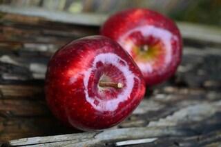 La dieta della mela rossa: tre giorni per dimagrire e depurare l'organismo