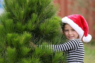 Come far durare l'albero di Natale più a lungo?