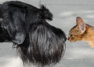 10 cibi comuni che per cani e gatti sono velenosi
