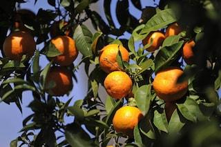 Non buttatele: 10 cose da fare con le bucce d'arancia