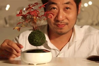 Arriva l'Air Bonsai, la pianta che riesce a volare (VIDEO)
