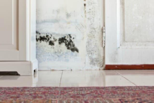 Come Eliminare L Umidita Dai Muri Con Soluzioni Alternative