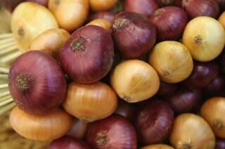 Cipolla: proprietà benefiche, controindicazioni e ricette