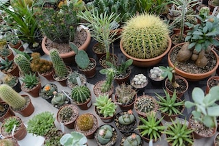 Come curare le piante grasse e ogni quanto annaffiarle