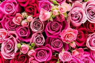 Come mantenere i fiori freschi più a lungo e avere cura dei fiori recisi