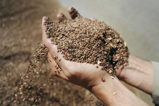 Semi di lino: proprietà benefiche, come assumerli e controindicazioni
