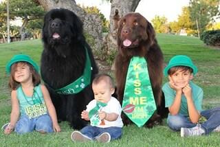 I più grandi babysitter del mondo: gli enormi cani sono i migliori amici dei tre bimbi