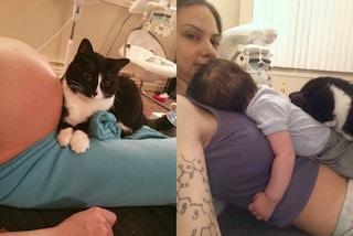 Si accoccola sul pancione e fa le fusa al neonato: Panda è il gatto più dolce del mondo