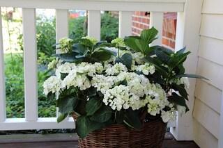 Piante perenni: come scegliere quelle più adatte a balconi e terrazze