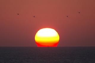 """Al tramonto vanno in catalessi, si risvegliano all'alba: sono i """"fratellini del sole"""""""