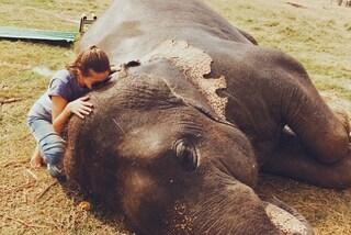 Lascia il lavoro e viaggia per il mondo: vuole salvare gli animali in via d'estinzione