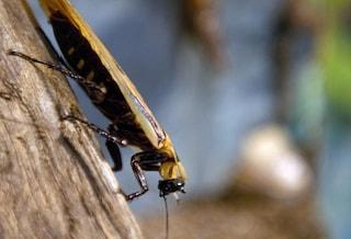 I rimedi naturali per eliminare gli scarafaggi