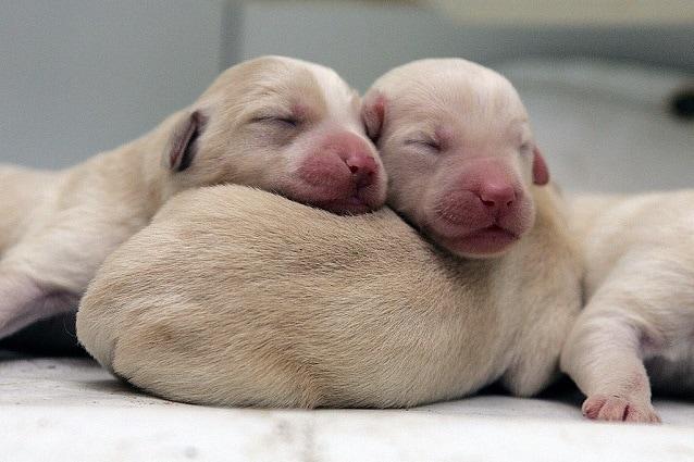 Nomi Cani Femminili Idee Originali In Ordine Alfabetico