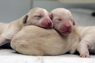 Nomi cani femminili: idee originali in ordine alfabetico