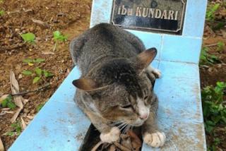 Il padrone muore, il dolce gattino torna ogni notte a dormire sulla sua tomba