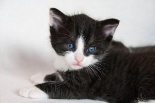 Festa del gatto: il 17 febbraio è il giorno dedicato all'amico a quattro zampe
