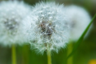 Allergie stagionali: i rimedi e i consigli utili per alleviare i sintomi