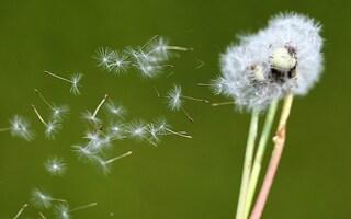 Allergia: cause, sintomi e rimedi per combatterla e prevenirla