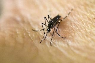 Come tenere lontane le zanzare con i rimedi naturali più efficaci
