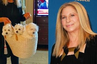 Barbra Streisand ha clonato il suo cane, ora ha due dolci cuccioli identici