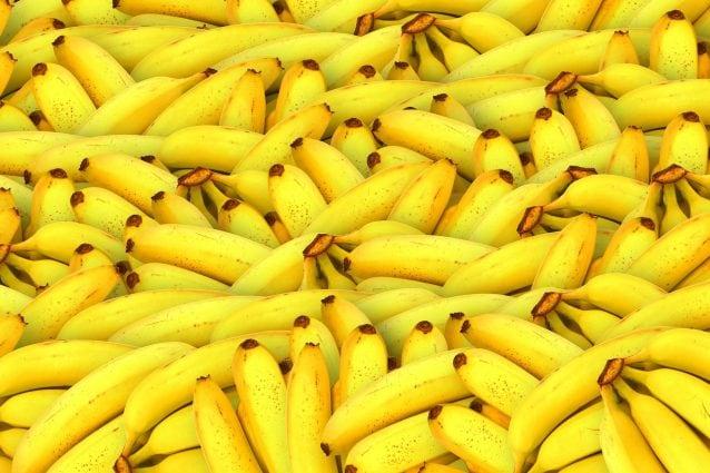 Banane con la buccia che si mangia: ecco il nuovo frutto con la scorza commestibile