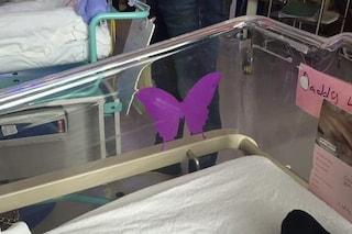 Una farfalla viola sulla culla dei neonati in ospedale: ecco cosa significa
