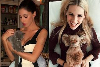 Tutte pazze per cani e gatti: da Belén alla Hunziker, le star che hanno un dolce cucciolo