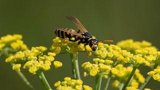 Come allontanare api, vespe e calabroni: rimedi e consigli per difendersi in modo naturale