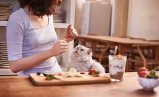8 alimenti dannosi per i gatti: ecco quali cibi evitare