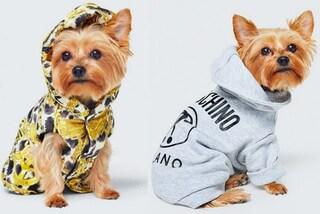 Moschino x H&M, arriva la collezione (low-cost) di cappottini per cani