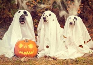 I 9 accessori più bizzarri di Halloween da sfoggiare quest'anno