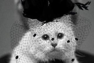Choupette con la veletta nera: così la gatta di Karl Lagerfeld ringrazia per le condoglianze