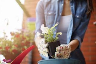 Come fare una talea: il metodo per riprodurre le piante in modo semplice