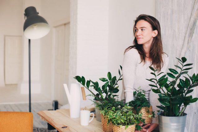 Piante Da Appartamento Utili Alla Salute.8 Piante Da Appartamento Che Purificano L Aria E Combattono L