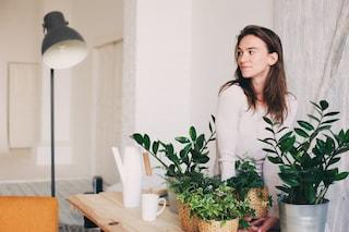 8 piante da appartamento che purificano l'aria e combattono l'inquinamento domestico