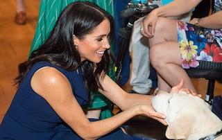 """Meghan Markle contro l'abbandono degli animali: """"Adottate un cane, vi migliorerà la vita"""""""