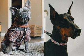 Tute griffate e guinzagli di cristalli: l'abbigliamento per cani e gatti diventa di lusso