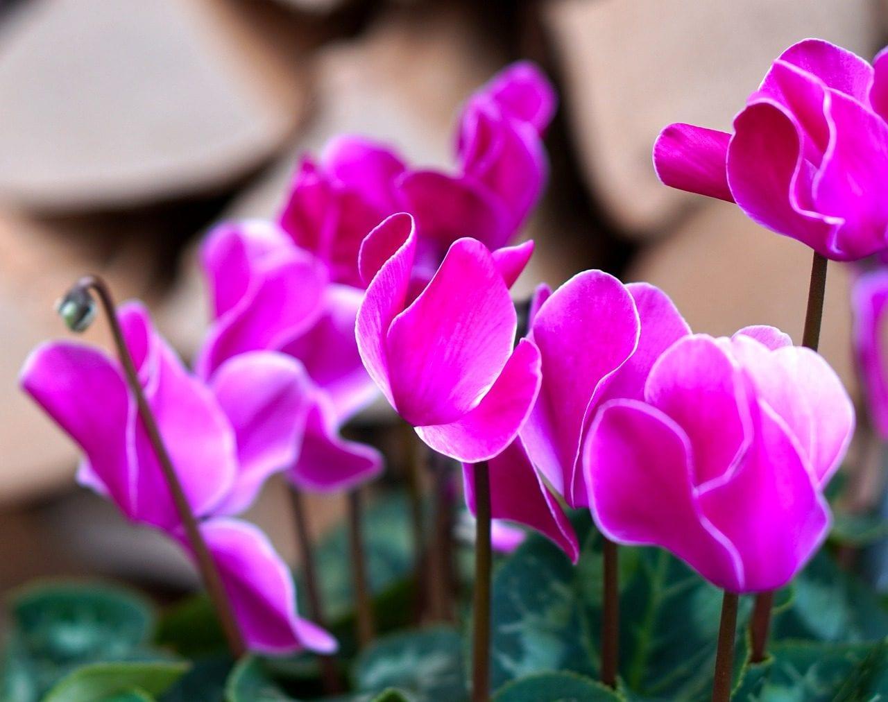 Fiori Da Balcone Ombra 10 piante fiorite da coltivare in autunno